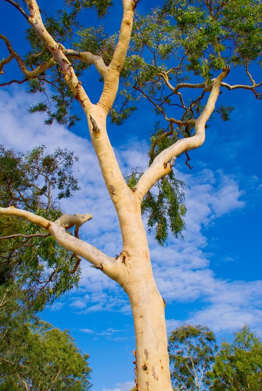 Tree Management In Australian Schools